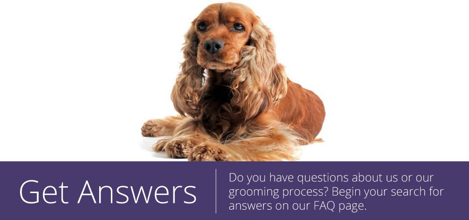 get answers - cocker spaniel