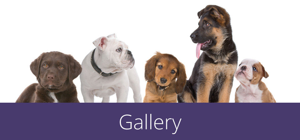 gallery - group of pups and dogs