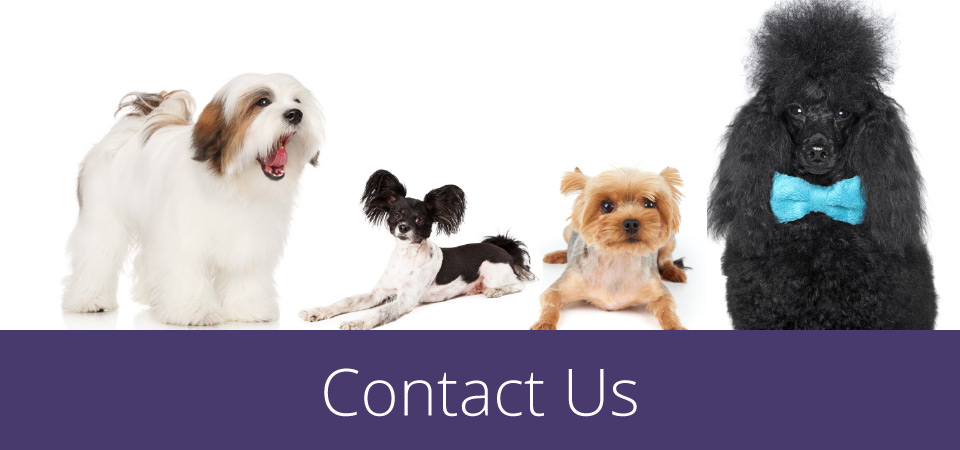 contact us - nicely groomed dogs together