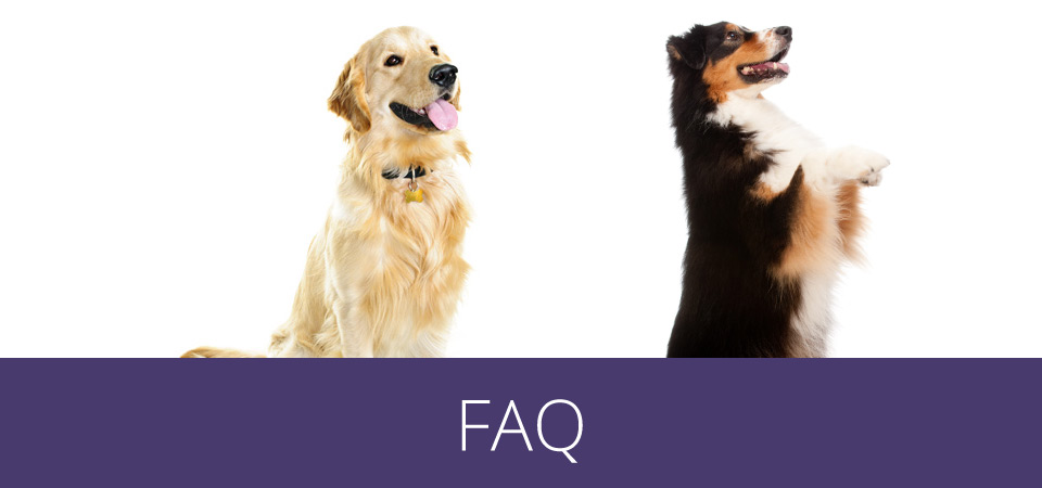 faq - dogs looking up