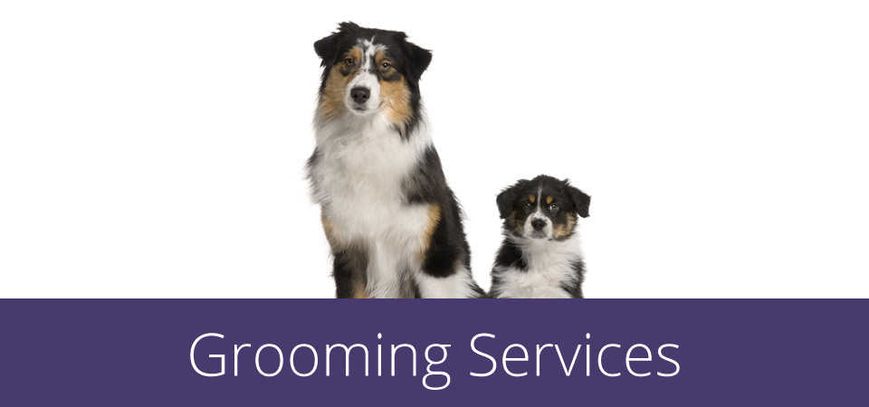 grooming services - mom and pup