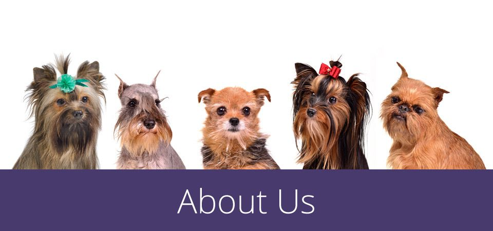 about us - group of small dogs