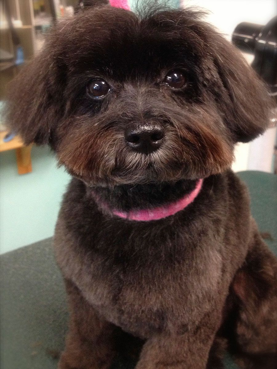 Dog Grooming Toronto | Grooming Services | Paw Pals Grooming